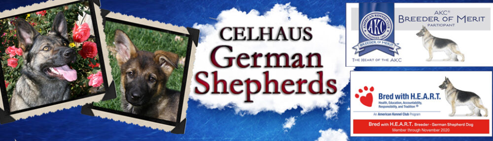 Celhaus German Shepherds Wyoming